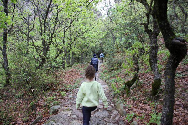 טיול הליכה בחורש - קפרניסי