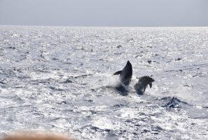 שייט דולפינים ועופות צבי ים -לפקדה פרבזה.