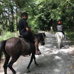 רכיבת סוסים באזור קלדוניה זגוריה